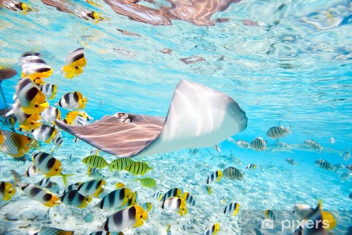 Fototapeta winylowa Bora Bora pod wodą - Ryby