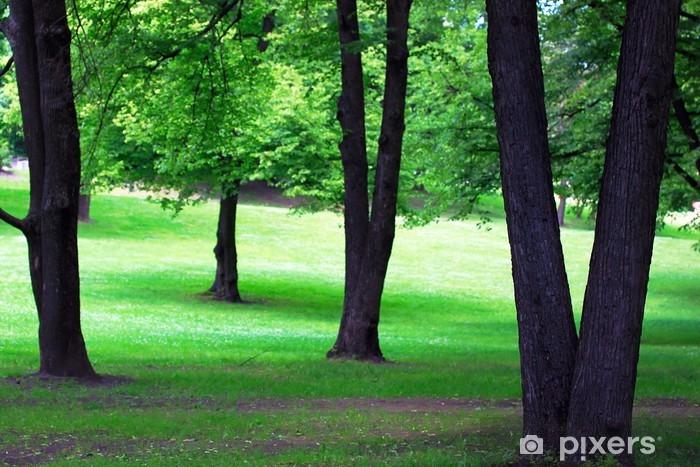 Fototapeta winylowa Park - Pory roku
