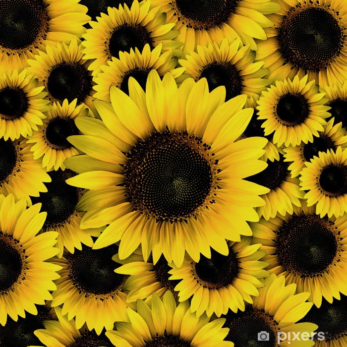dark yellow Sunflower petals closeup patterns background ...