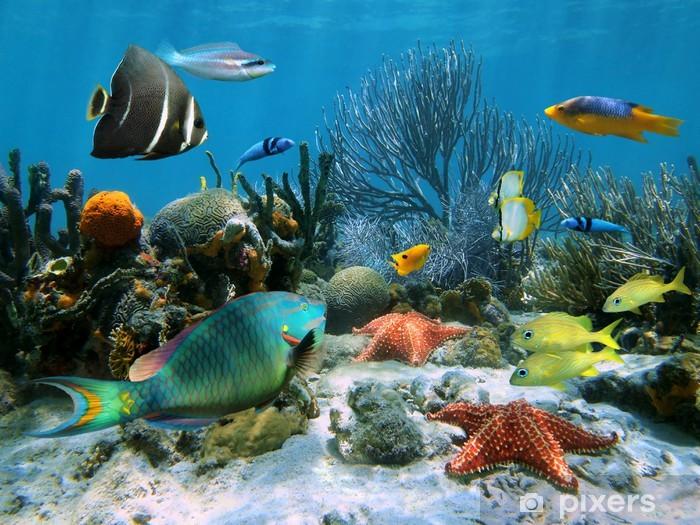Fotomural Estándar Arrecifes de coral y estrellas de mar - Arrecife de coral