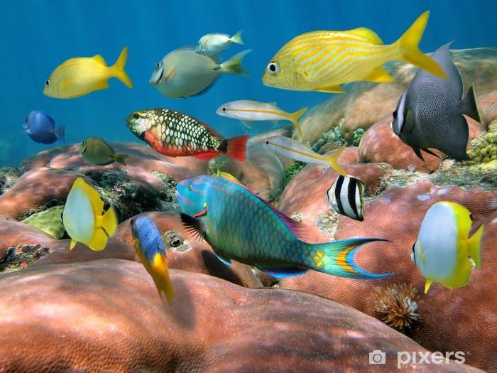 Vinilo Pixerstick Cardumen de peces en un arrecife de coral - Arrecife de coral