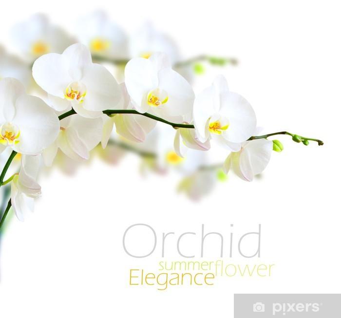 Papier peint vinyle Orchidée blanche - iStaging