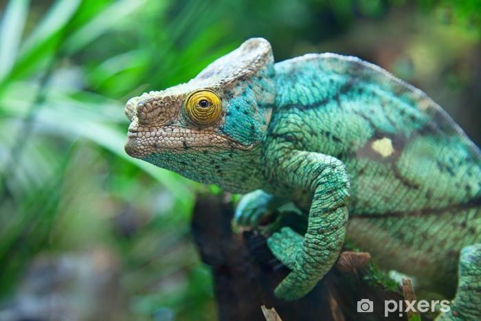 Green chameleon Pixerstick Sticker - Themes