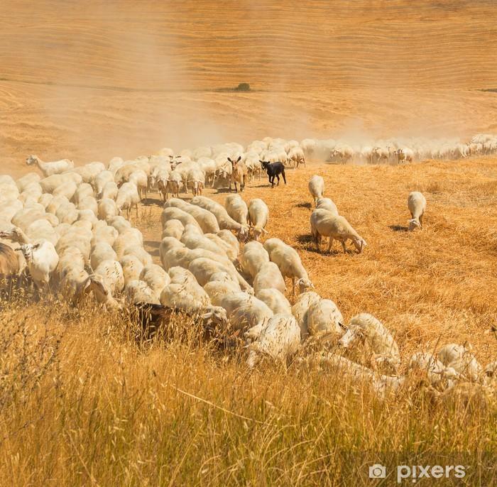 Papier peint vinyle Troupeau de moutons dans un champ de la Toscane - Europe