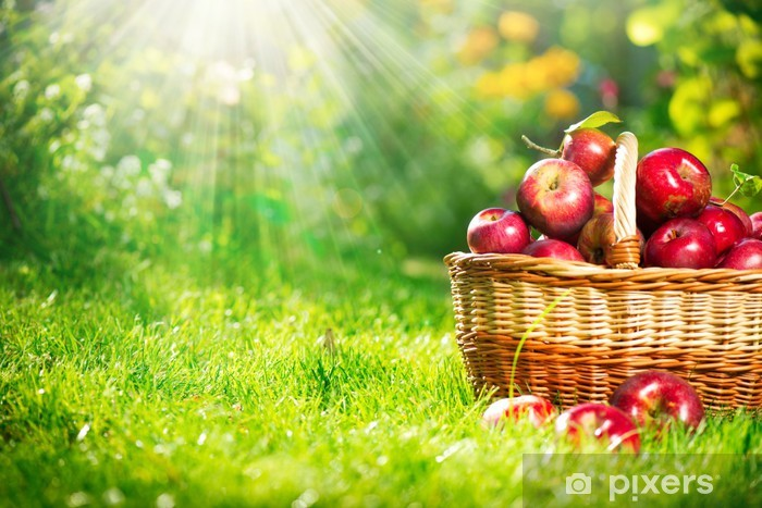 Organic Apples in the Basket. Orchard. Garden Pixerstick Sticker - iStaging