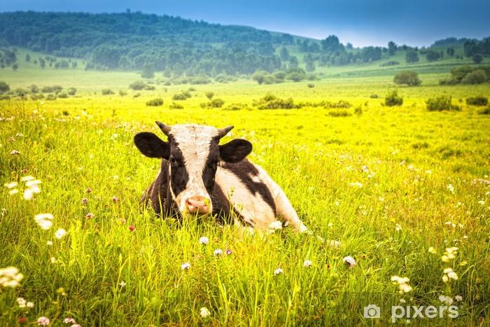 Naklejka Pixerstick Krów wypasanych na łące latem zielony - Ssaki