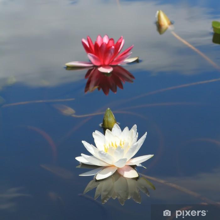 Plakat Lilia wodna w stawie - Kwiaty