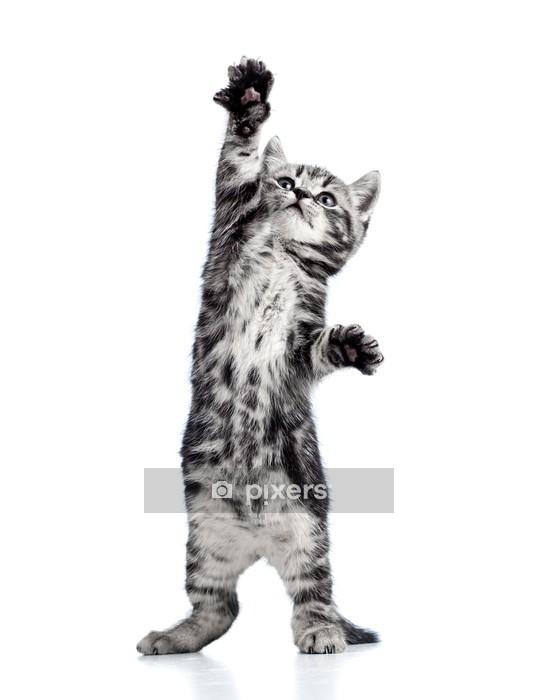 Muursticker Speelse kitten kat geïsoleerd op wit - Thema's