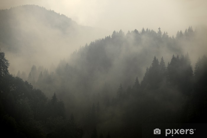 Fototapet av Vinyl Foggy Forest - Teman