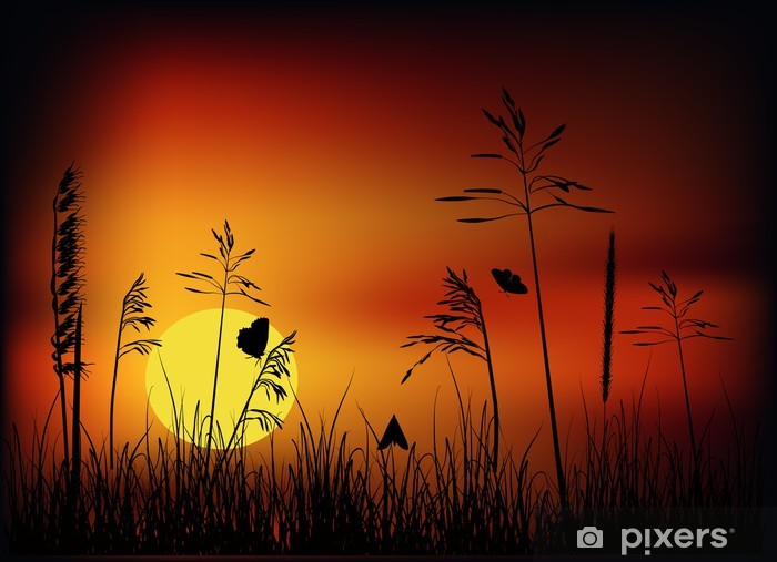 small butterfly in grass at sunset Wall Mural - Vinyl