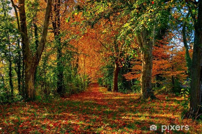Fototapeta winylowa Leśna ścieżka Autumn - Pory roku