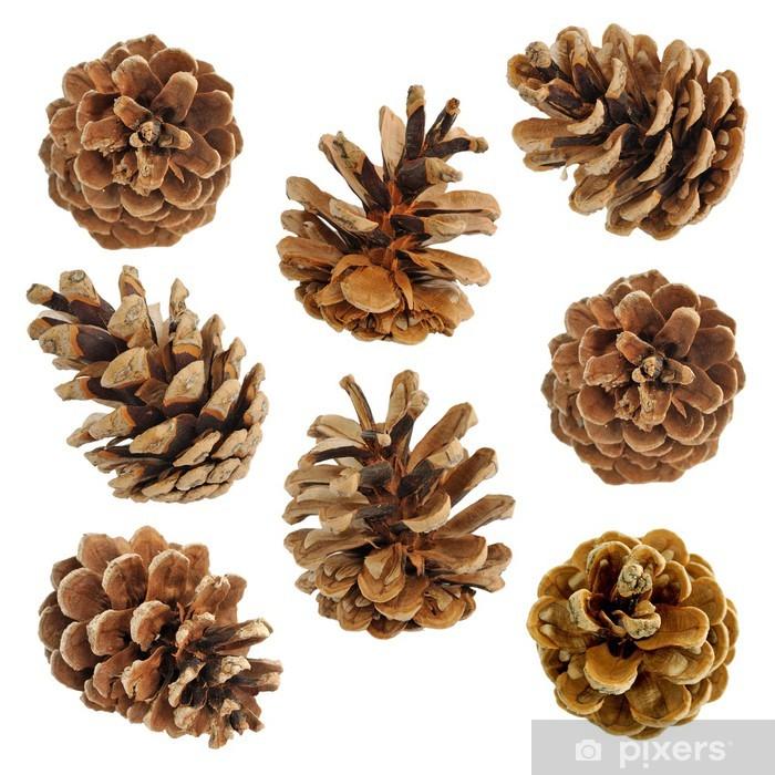 Fototapeta winylowa Duży zestaw różnych szyszek drzew iglastych na białym - Rolnictwo