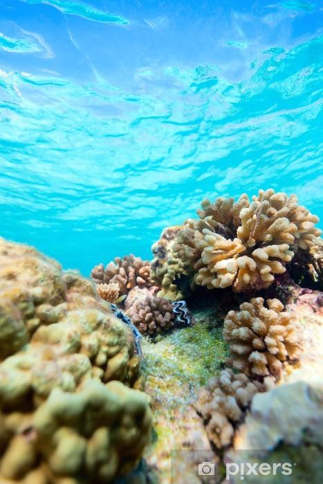 Fototapeta samoprzylepna Rafa koralowa - Rafa koralowa