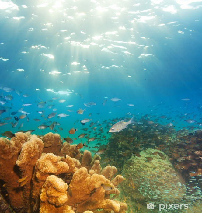 Exciting Underwater Panorama Wall Mural Pixers We Live To Change