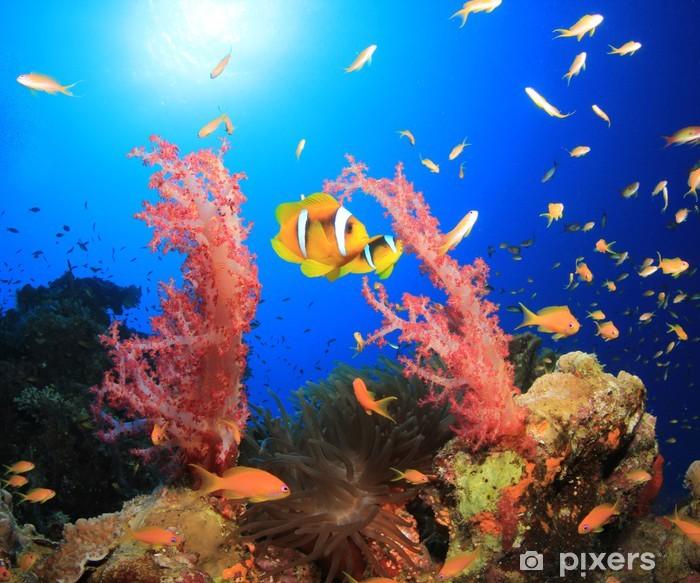 Sticker Pixerstick Poisson clown et coraux dans la mer Rouge, en Egypte - Animaux marins