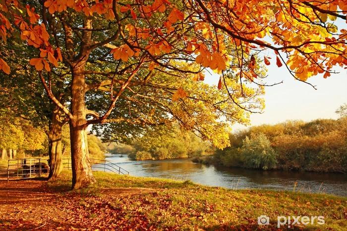 Beautiful Autumn in the park Vinyl Wall Mural - Destinations