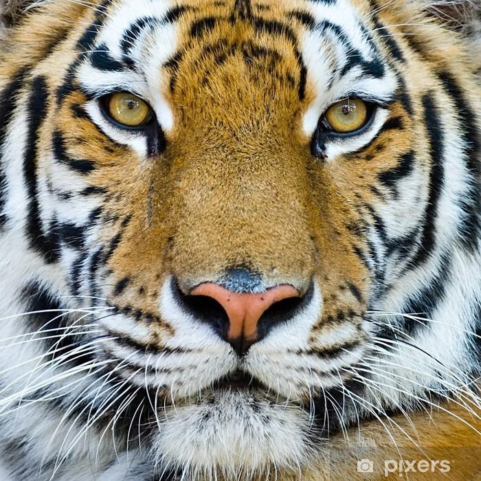 Naklejka Pixerstick Tygrys - Tygrysy