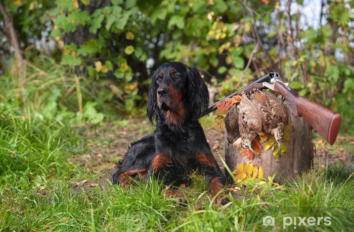 Fotomural Estándar Pistola perro cerca de la escopeta y trofeo, al aire libre - Mamíferos