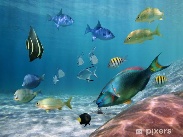 Fototapeta winylowa Ławica ryb na piaszczyste dno morskie - Tematy