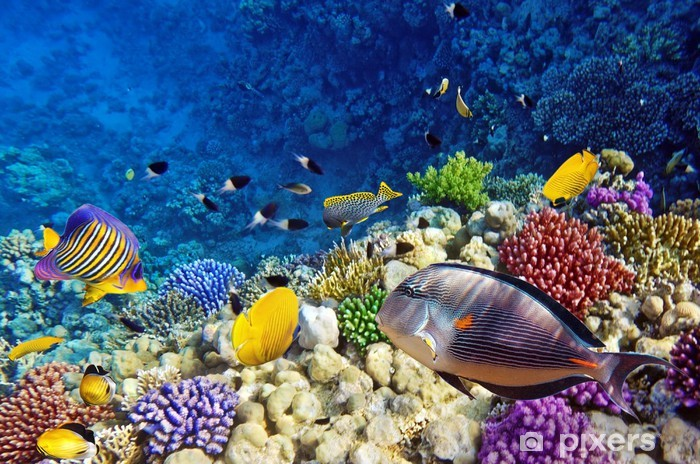 Sticker Pixerstick Corail et poisson rouge dans le Sea.Egypt - Destin