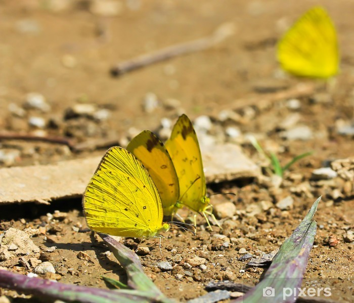 Poster Butterfly macro - Andere Andere