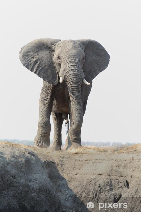 Papier peint vinyle L'éléphant d'Afrique à venir vers le photographe - Mammifères