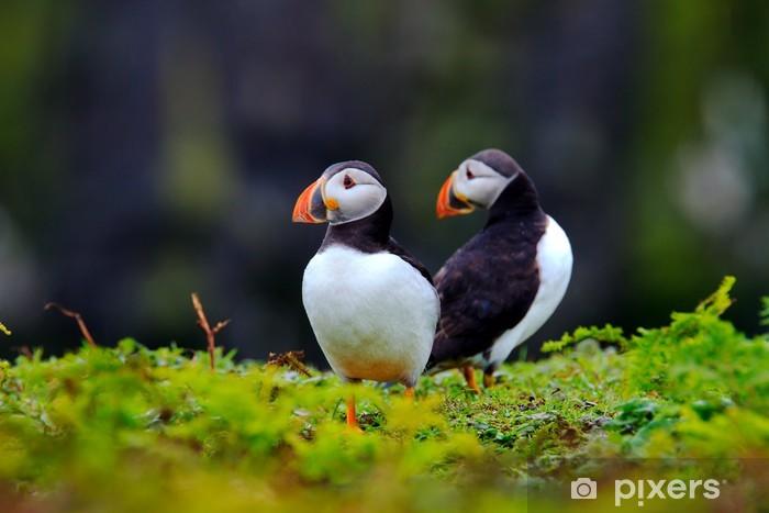 Nálepka Pixerstick Dva Puffins - Ptáci