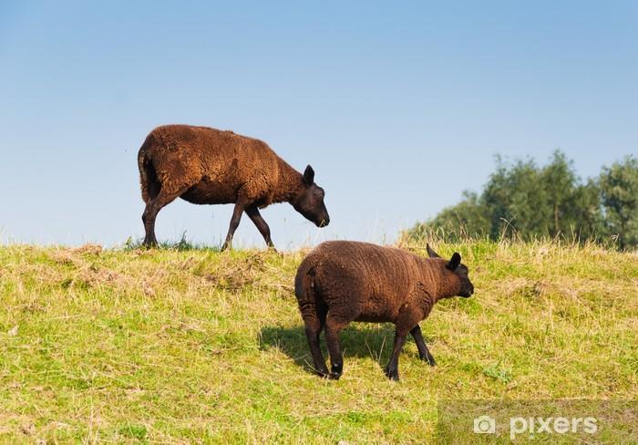 Vinyl-Fototapete Zwei braune Schafe mit einem dicken und warmen Mantel - Säugetiere