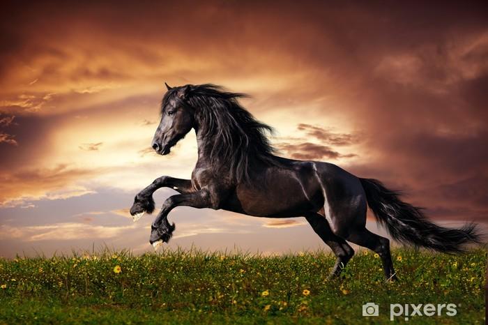 Fototapeta winylowa Czarny koń fryzyjski w galopie -