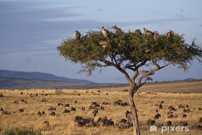 Vinyl Fotobehang Landschap van de savanne in Kenia - Thema's