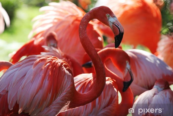 Fototapeta winylowa Zoo, Czerwonak - Ptaki