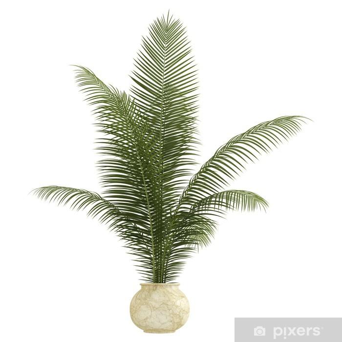 Fototapete Areca Palme Zimmerpflanze