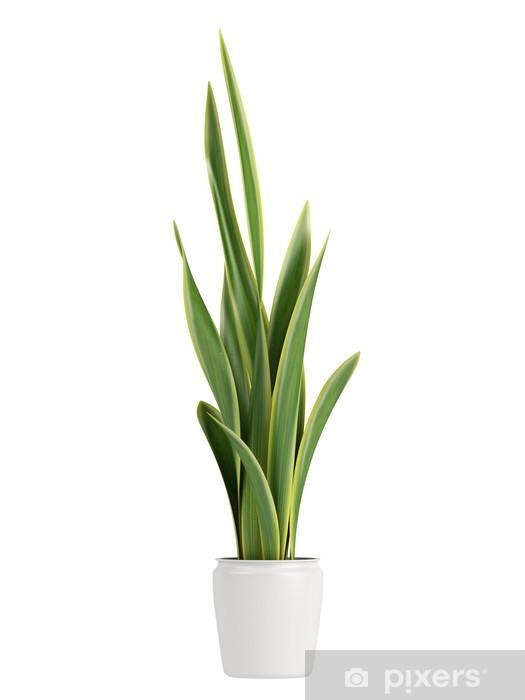 Nálepka Pixerstick Sansevieria pěstování v květináči - Rostliny