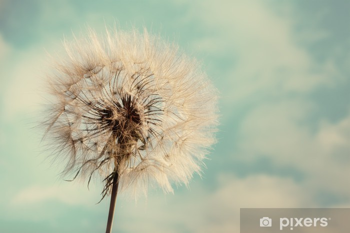 Dandelion Isolated on blue cloudscape Pixerstick Sticker - Themes