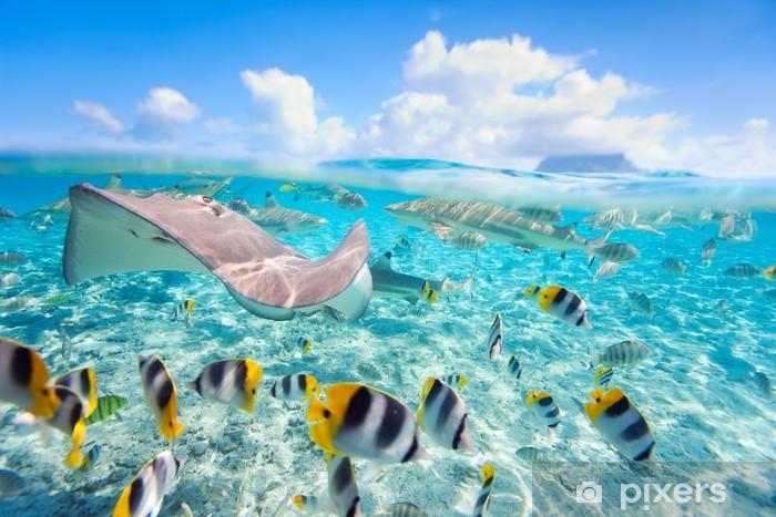 Bora Bora underwater Pixerstick Sticker - Fishes