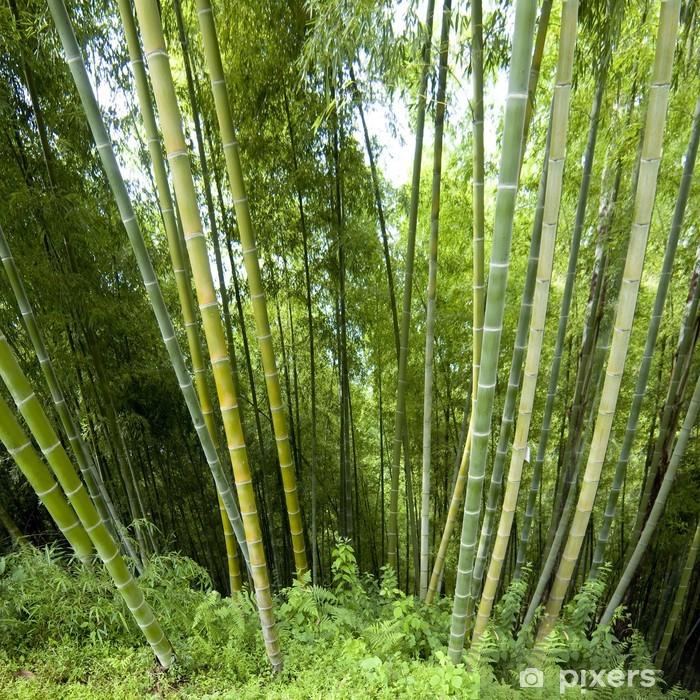 Plakat Tło w bambus - Europa
