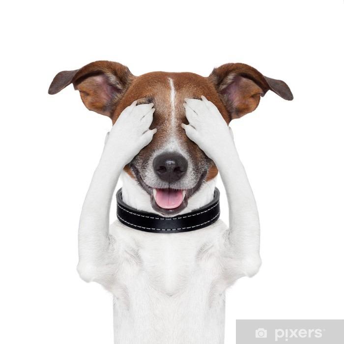 Fototapeta winylowa Ukrywanie obejmującą psa oczu - Naklejki na ścianę
