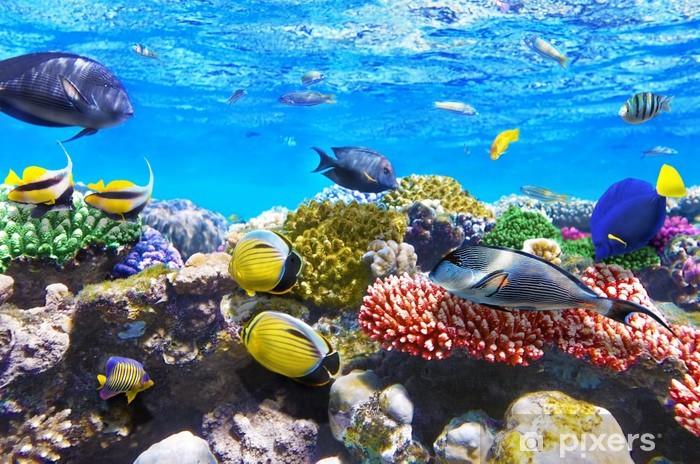 Sticker Pixerstick Corail et poisson rouge dans le Sea.Egypt - Poissons