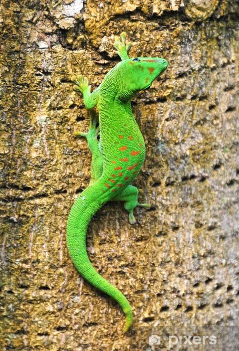 Sticker Pixerstick Madagascar gecko diurne - Thèmes