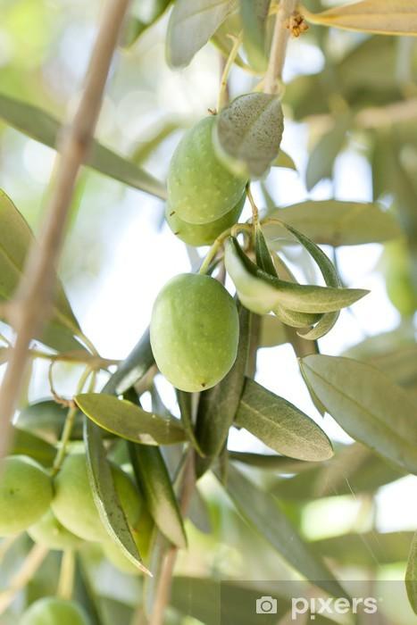 Papier peint vinyle Organiques olives vertes sur un olivier - Olives
