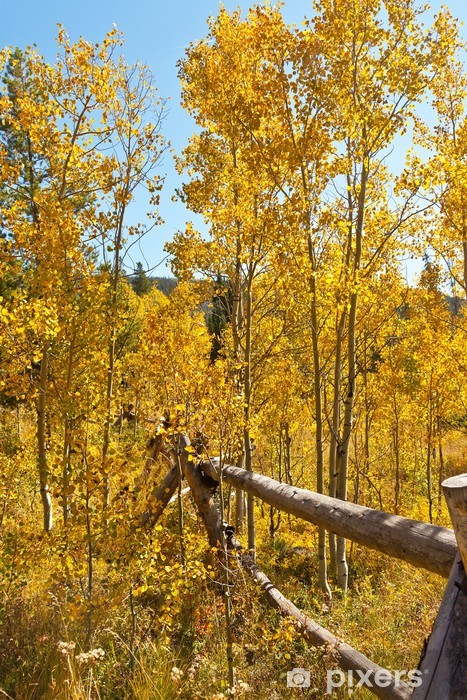 Fototapeta winylowa Drzew złoty osika - Pory roku