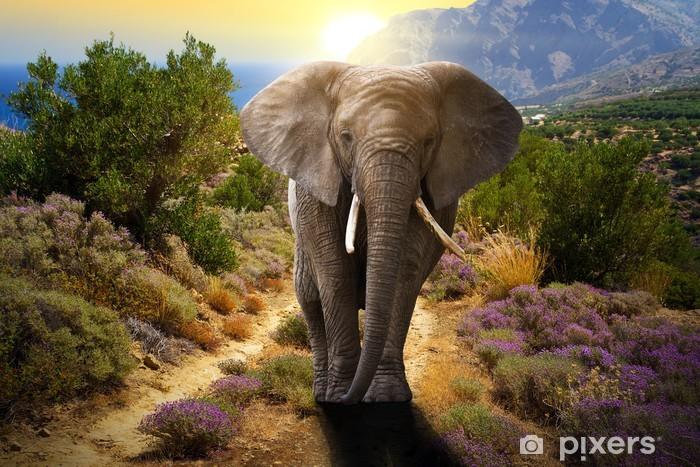 Naklejka Pixerstick Słoń chodzenie na drodze o zachodzie słońca - Tematy