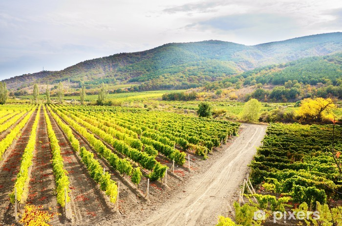 Fototapeta samoprzylepna Winnice - Rolnictwo