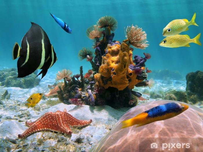Papier peint vinyle Colorful fond de la mer dans les tropiques - Thèmes
