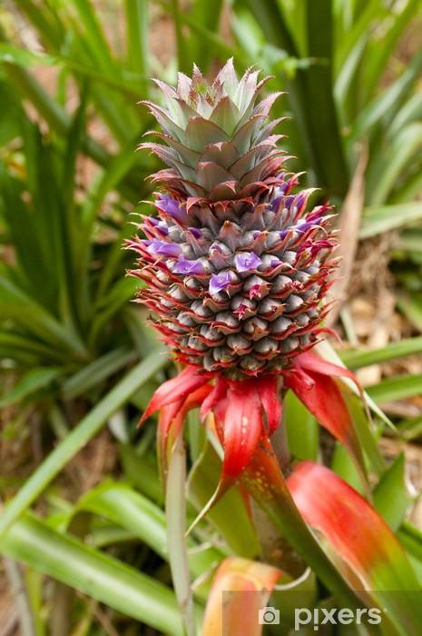 Fototapeta winylowa Ananas - Owoce