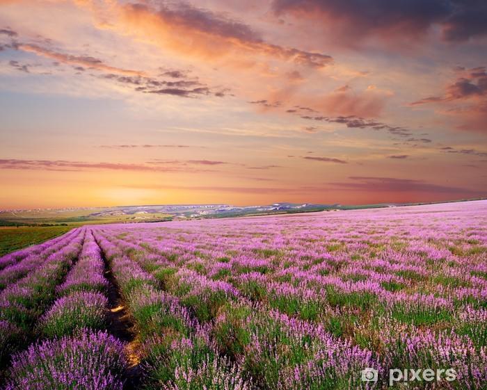 Meadow of lavender Pixerstick Sticker - Themes