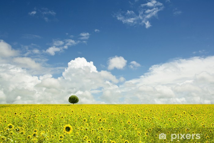 Vinyl-Fototapete Sonnenblumenfeld über bewölkten blauen Himmel - Themen
