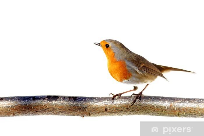 Vinilo Pixerstick Robin rojo sobre fondo blanco • Pixers® - Vivimos ...