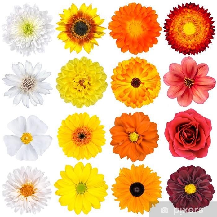 Fiori Arancioni E Gialli.Carta Da Parati Vari Bianco Giallo Fiori D Arancio E Rosso