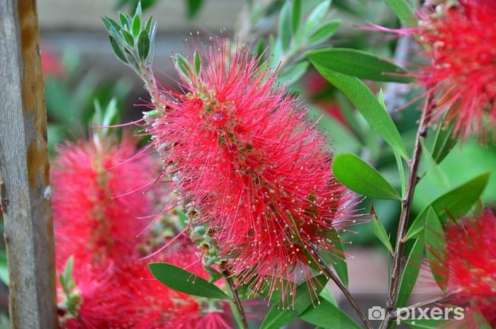 Sticker Pixerstick Plante australienne - Plantes
